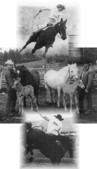 Iris (Fletcher) Wright, William Wright, Stan Wright, and Dave Wright (riding the bull)